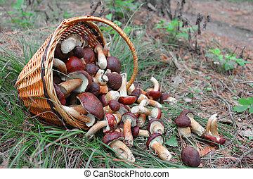foresta, funghi, in, uno, bas