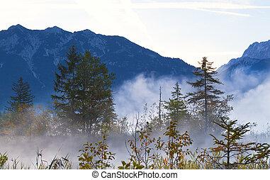 foresta, in, alpi bavarian, in, nebbia