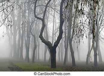 foresta, in, il, nebbia,