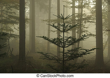 foresta, in, nebbia, 06