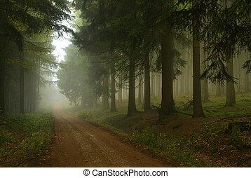 foresta, in, nebbia, 18