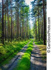 foresta, in, polonia