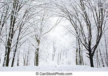 foresta, inverno