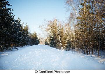 foresta, inverno, strada, neve