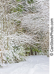 foresta, inverno, strada, nevoso
