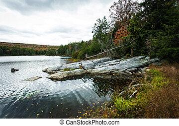 foresta, lago