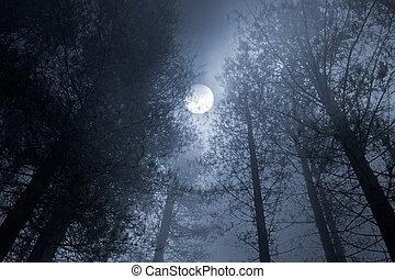 foresta, luna piena