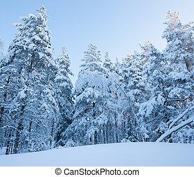 foresta, nevoso