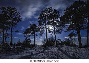 foresta, notte, con, chiaro di luna