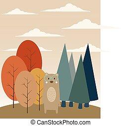 foresta, orso