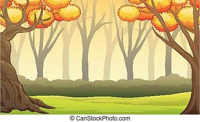 foresta, paesaggio, alberi nudi, autunno