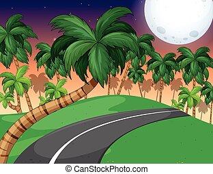 foresta, palma, scena, notte