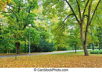 foresta, parco, in, colorito, autunno, stagione