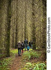 foresta, passeggiata