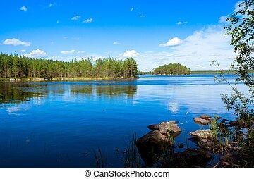 foresta pino, appresso, il, lago