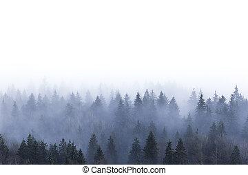 foresta, pino, nebbioso