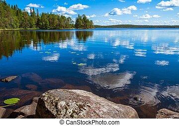 foresta pino, riflessione, in, il, lago