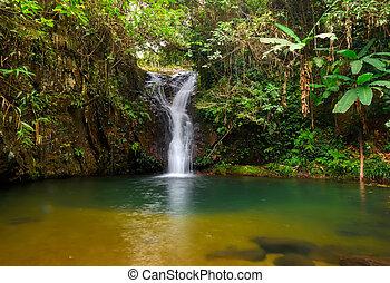 foresta pioggia, cascata