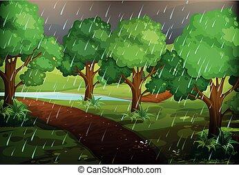 foresta, piovoso, scena, giorno