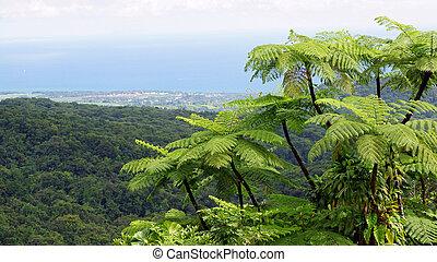 foresta pluviale, guadalupa, caraibico