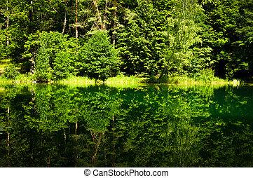 foresta, riflessione, in, il, lago