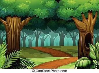 foresta, scena, con, traccia, segno, scia, in, il, legnhe