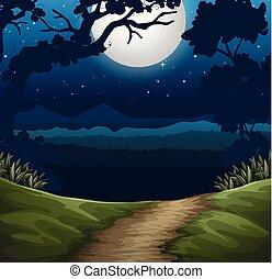 foresta, scena, notte