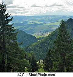 foresta, scenario