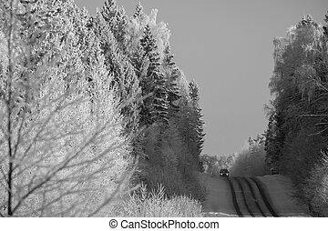foresta, strada
