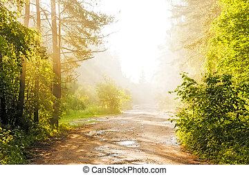 foresta, strada, in, il, nebbia