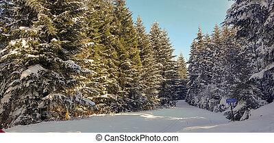 foresta, strada, inverno