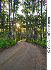 foresta, strada, sporcizia