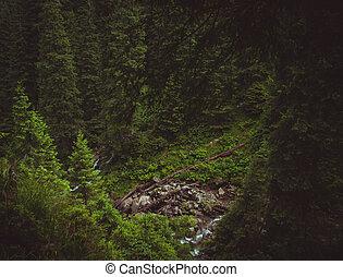 foresta, strisciante