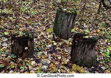 foresta, stubs