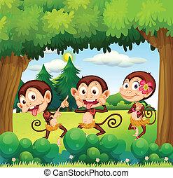 foresta, tre, scimmie, ballo