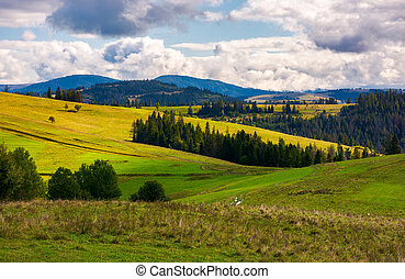 forested grassy hills on a cloudy day. lovely landscape of...