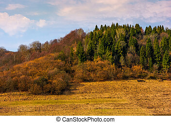 forested hill in springtime. lovely countryside scenery with...