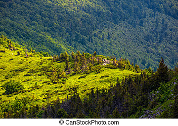 forested hill of mountain ridge. beautiful summer scenery