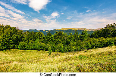 forested hill on the meadow in summer. lovely landscape with...