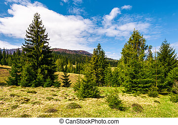 forested hills and grassy meadows in springtime. beautiful...