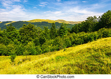 forested hills and meadows of Svydovets ridge. lovely summer...