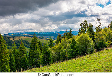 forested hills of Carpathian mountains. beautiful landscape...
