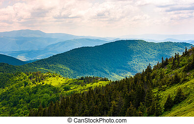 forested hills of Carpathian mountains. beautiful scenery in...