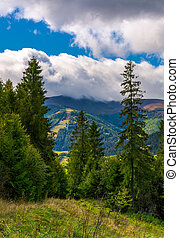 forested hills of Carpathian mountains. beautiful scenery on...
