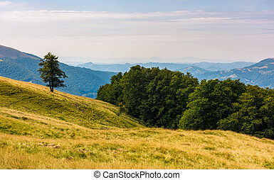 forested hills of Carpathian mountains. beautiful summer...