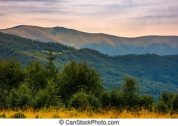 forested hills of Carpathian mountains in summer. Apetska...