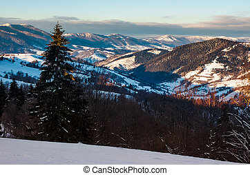 forested hills of Carpathian mountains in winter. beautiful...