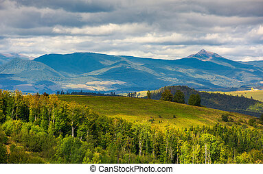 forested hills of Carpathian mountains. wonderful landscape...