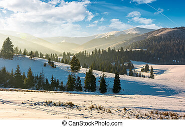 forested hills of mountain ridge in winter. gorgeous nature...