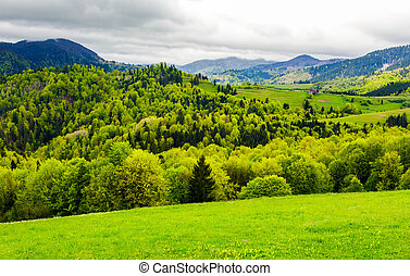 forested hills of mountainous rural area. beautiful...